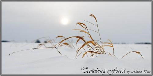 _D093141-18-12-2010-Grashalme