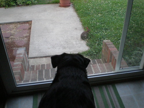 Watching a bunny