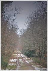 Suivre le chemin (JDutheil-Photography) Tags: st photoshop nikon cs2 le nikkor grip 53 1870mm mayenne d60 cyr photofiltre 53320 phottix jojothepotato gravelais