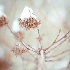 snow-capped (>TIM<) Tags: schnee winter snow 50mm dof pentax bokeh hannover snowcapped georgengarten k200d