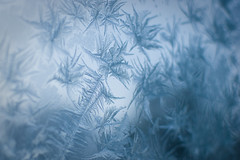 The World Beyond the Frost Flowers (Muhonion) Tags: winter snow flower ice window suomi finland bokeh nikond50 lumi talvi j kukka ikkuna nikkor35mm18