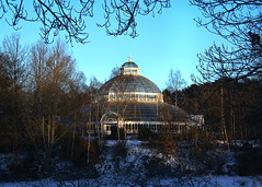 Sefton Park Palm House (Fields of View) Tags: park winter light sun house glass liverpool canon palm sefton canoneos1000d fieldsofview timfields