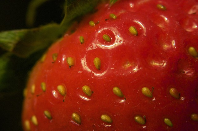 12-25-10strawberry