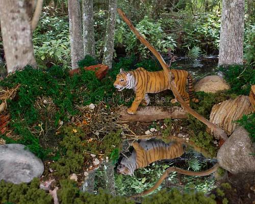 Tiger Diorama 5293344145_2710c8aaeb