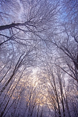 Hoar Frost Canopy (Matt Champlin) Tags: life trees sunset snow tree beautiful up rural forest landscape evening frost snowy hoarfrost farm farming frosty covered canopy scenes tully scenicwinter gettyholiday2010 hoarfrostchristmaschristmas farmwhitepeacescenicwinterwinter