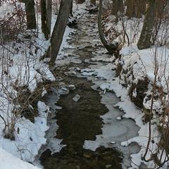 28. Dezember 2010: Eisrnder am Bach (Gertraud-Magdalena) Tags: schnee winter bach dezember eis wald
