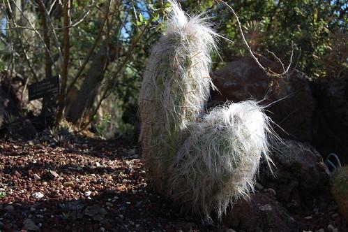 mystery cactus.