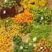 Mercado dos Lavradores_9