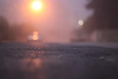 January First. (redaleka) Tags: road street trees cars fog lights automobile bokeh foggy seneca januaryfirst vahicles threehundredsixty