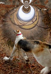 Bella's Vision Quest - 2 (phobexyz) Tags: trip cliff dog ontario nature burlington out other collie lab mt nemo hiking walk hill border orb warp warped hike next hills mount photograph sphere fields bella trippy dimension stroll circular spheroid ont tripping on tripped campbellville