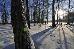flickr_DSC0179 (Jacek Irzykowski) Tags: winter forest poland allxpressus