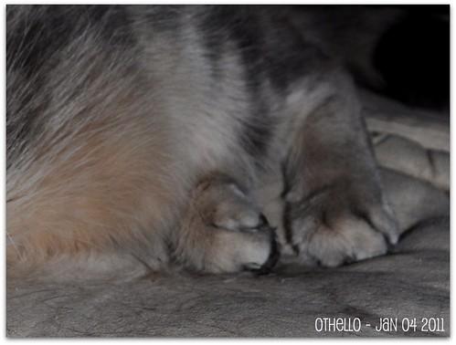 Othello - Jan 04 2011