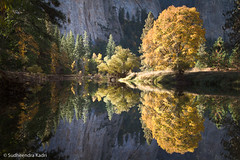 Autumn Morning - Yosemite National Park, CA (Sudheendra Kadri) Tags: california reflection fall nature water northerncalifornia river still autum merced symmetry yosemite yosemitenationalpark sierranevada yosemitevalley mercedriver sudhi landscapephotography fallseason sudheendrakadri