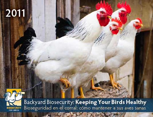 2011 Biosecurity for the Birds Calendar