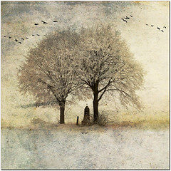 Music for paradise (pixel_unikat) Tags: winter snow cold tree birds austria textured loweraustria wintermood stiftheiligenkreuz heiligenkreuzabbey thankstoskeletalmessfortextures truthandillusion