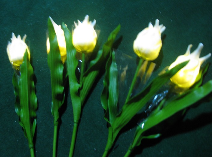 white tulip light bouquet of 5