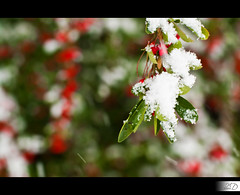 Christmas Colors (HD Photographie) Tags: snow france pentax bokeh ardennes neige hd herv k7 2011 dapremont hervdapremont