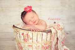 .dainty.  {explored} (*miss*leah*) Tags: flowers roses barn vintage nikon antique babygirl newborn headband dainty sleepingbaby newbornportrait woodbackground nikond700 leahhoskins professionalnewbornphotography