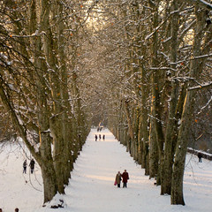 Flaneur (Raphs) Tags: park trees winter snow plane germany deutschland evening alley boulevard tbingen raphs sycamoretree promenader platanenallee canonixus70