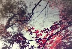 Transition Ⅲ (y2-hiro) Tags: autumn winter tree leaves japan nikon kyoto 2470mm d3s
