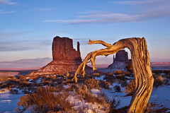 Tree and Mitten at Sunset (dolphin2421) Tags: sunset tree nature landscape getty navajo monumentvalley 2470l navajotribalpark newvision canon2470l flickraward canoneos5dmkii canoneos5dmkll flickraward5 mygearandme mygearandmepremium mygearandmebronze mygearandmesilver mygearandmegold peregrino27newvision
