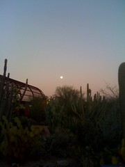 Moon over cacti