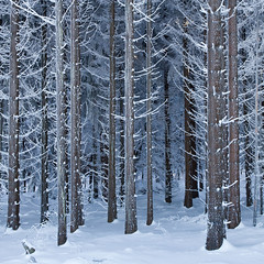 Winter #27 (Geoffrey Gilson) Tags: schnee trees winter white snow cold ice germany deutschland frozen hiver neige geoffrey wonderland weiss blanc froid glace gilson sauerland winterberg gele canoneos7d wwwgeoffreygilsonnet