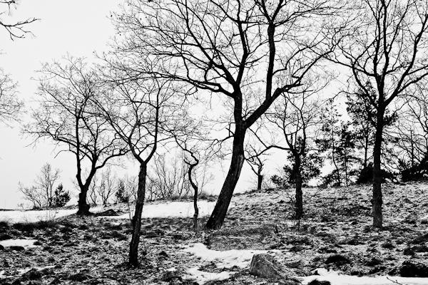 20110121_#07 svartvitt landskap Sundbyholm