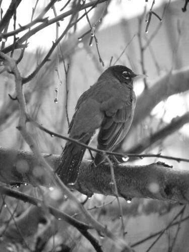 Meditative Bird