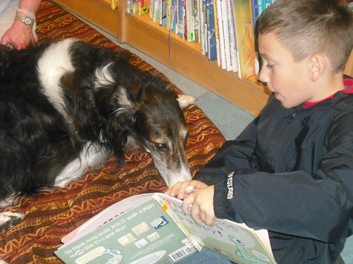 Furry Friend Max at Willow Glen Branch
