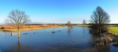 Hochwasser / Rur (frank-heinen-photographer) Tags: panorama geotagged deutschland wasser flood tide eifel tau deu nordrheinwestfalen hightide wassertropfen hochwasser nass pegel unwetter rur wasserstand berschwemmung niederzier selgersdorf afsnikkor2470mm128ged geo:lat=5087783333 geo:lon=640818333