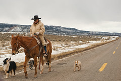 cattle drive (krugerlive) Tags: road west cowboy colorado western paradox bedrock route90 workingdogs cowherd paradoxvalley naturita