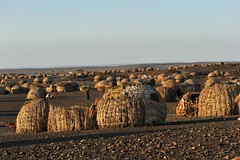 Turkana tribe huts, Lake Turkana, Northern Kenya (christophe_cerisier) Tags: africa landscapes kenya huts tribes turkana greatriftvalley laketurkana