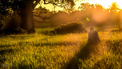 on his way to work (flat_rate21) Tags: rural sunrise land farmer ricefields