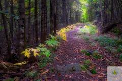 La saison de l'espoir/The season of hope/Hoppas ssongen (Elf-8) Tags: fall autumn color forest path shade light hope