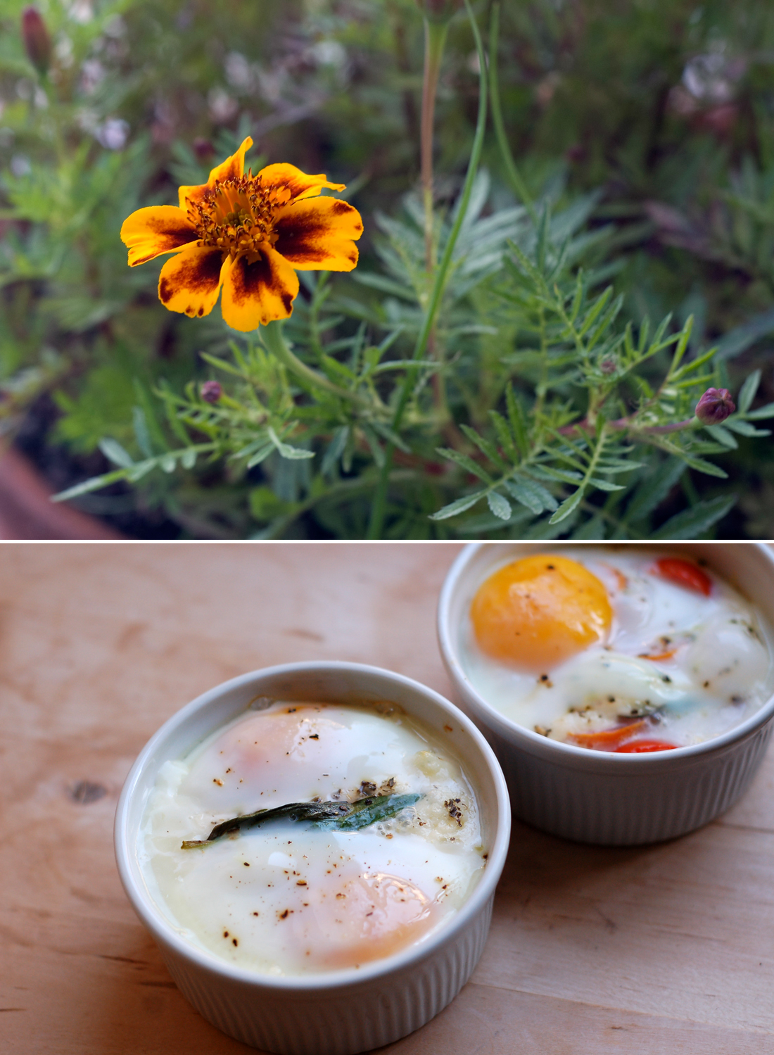 Ovos en cocotte // Egg en cocotte