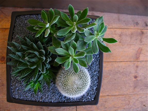 plantings 004