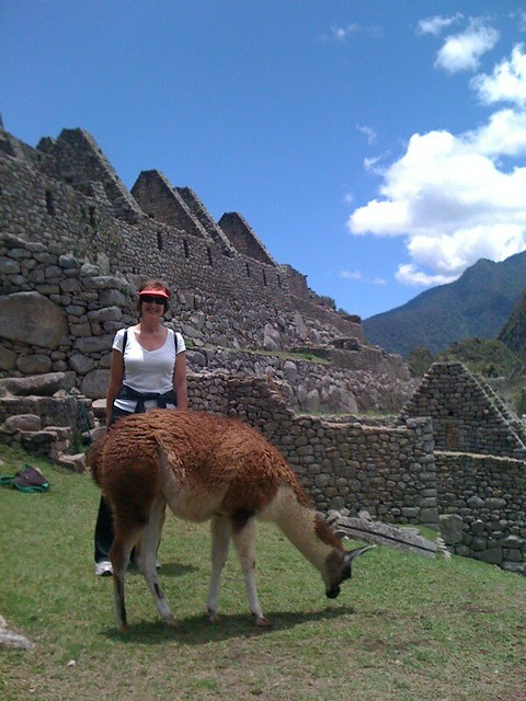 Llama lunch at Machu Pichu