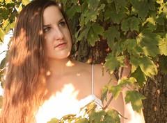 Sunlight on Trees (JennaCitrus) Tags: color art digital photography andtherewaslight