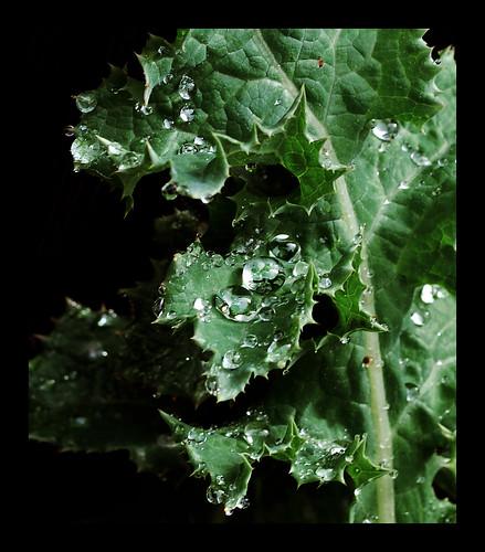 DewDrops0115