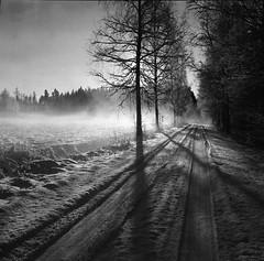 frost mist (Foide) Tags: finland blackdiamond vaasa vasa platinumpeaceaward