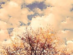{Echo} Week 26 - Clouds