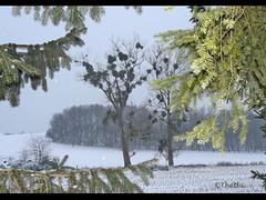 1012 cn 101202 (thethi (don't like beta groups)) Tags: nature rural belgium belgique champs neige soir arbre dcembre namur wallonie inthesky provincedenamur faves18 bestof2010 setnamurcity ruby15 setmorethan15forexplore20102011 vgtauxquot albumdcembre setvegetaux
