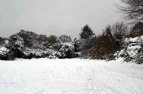 Snow-Nov_10_1