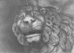 Lion (Hihnt) Tags: rome roma lion 400 rodinal 3200 rom foma sculptre