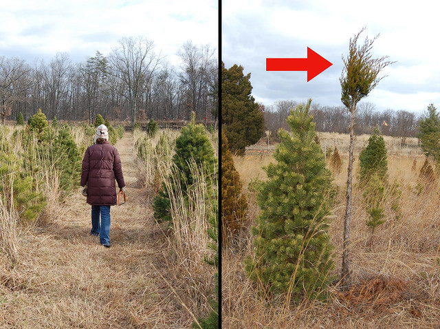 We found the perfect tree!