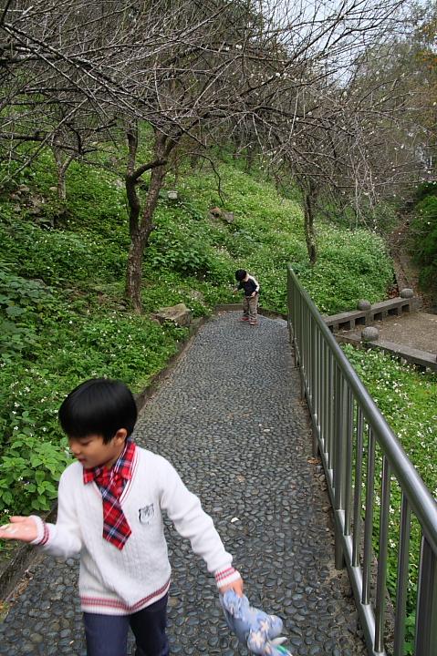槭林公園007