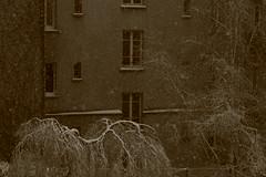 IMG_6332 (pellegrini_paris20) Tags: snowflake schnee white snow paris canon eos flake neige weiss blanc ville flocons flocon itsnows flocke flocken schneeflocke schneit flocondeneige souslaneige esschneit floconsdeneige ilneige 1000d