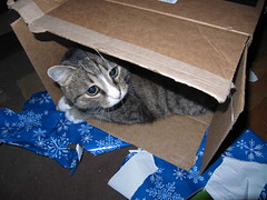 Spike in his shanty town... (Star Cat) Tags: birthday cat box gifts presents happybirthday spike theboy shantytown catinabox 12810 spikeydoodle spikeydonut spikeyburger