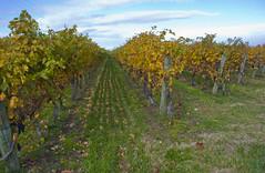 (A Great Capture) Tags: ald ash2276 ashleyduffus ald ashleysphotographycom ashleysphotoscom ashleylduffus wwwashleysphotoscom